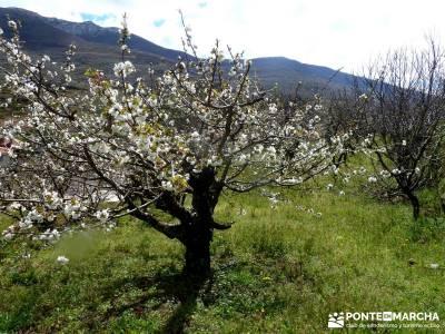Cerezos flor Jerte; Nogaleas; senderismo en madrid rutas; excursiones senderismo madrid;mochilas lis